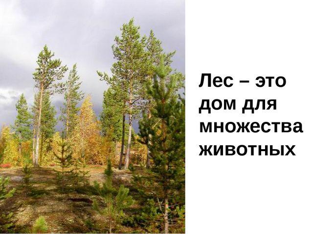 Лес – это дом для множества животных