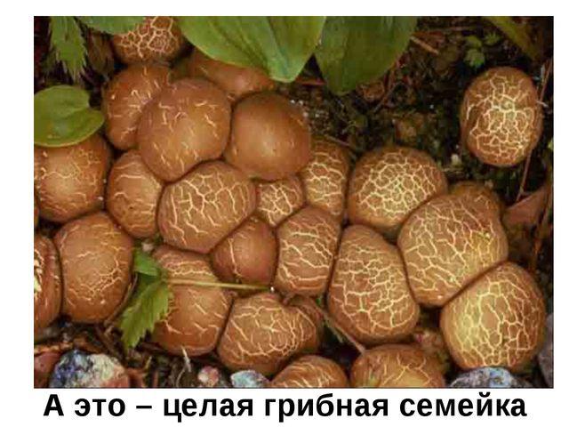 А это – целая грибная семейка