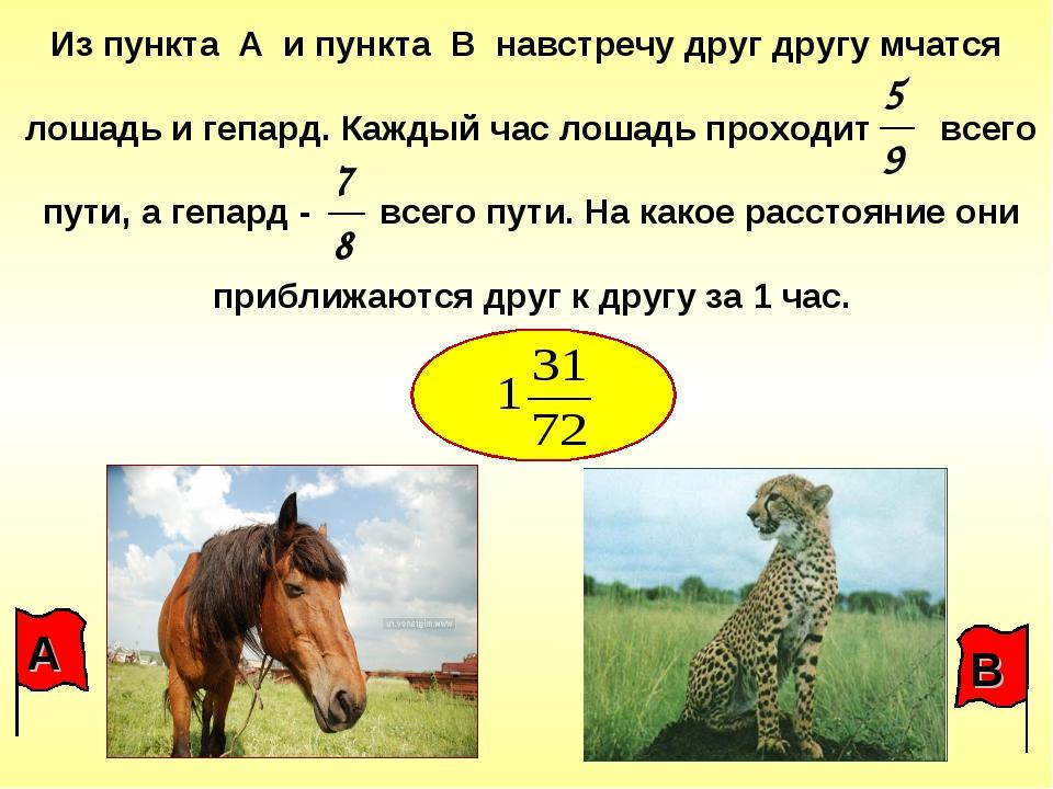 Из пункта А и пункта В навстречу друг другу мчатся лошадь и гепард. Каждый ча...