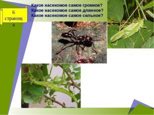 Какое насекомое самое громкое? Какое насекомое самое длинное? Какое насекомое