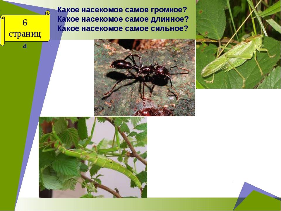 Какое насекомое самое громкое? Какое насекомое самое длинное? Какое насекомое...