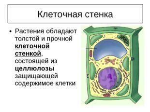 Растения обладают толстой и прочной клеточной стенкой, состоящей из целлюлозы