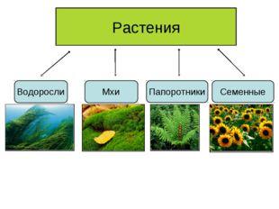Растения Водоросли Мхи Папоротники Семенные
