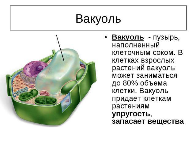 Вакуоль - пузырь, наполненный клеточным соком. В клетках взрослых растений ва...