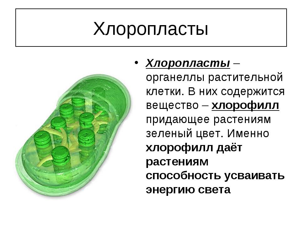 Хлоропласты Хлоропласты – органеллы растительной клетки. В них содержится вещ...