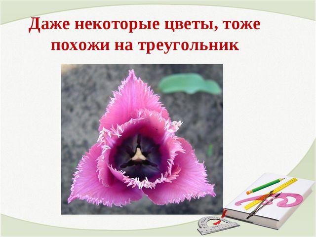 Даже некоторые цветы, тоже похожи на треугольник