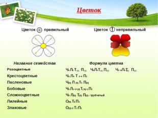 Цветок Название семействаФормула цветка РозоцветныеЧ5 Л5 Т П Ч5Л5Т П Ч5 +5Л
