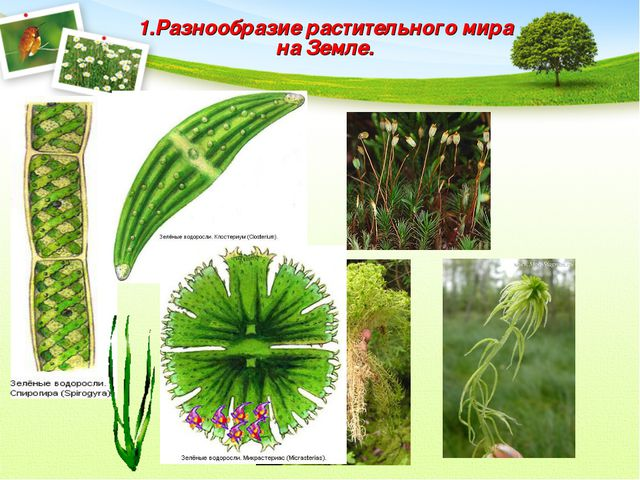 1.Разнообразие растительного мира на Земле.