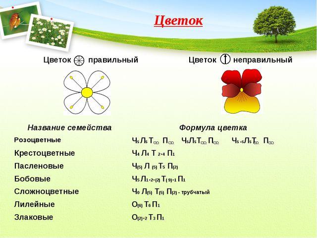 Цветок Название семействаФормула цветка РозоцветныеЧ5 Л5 Т П Ч5Л5Т П Ч5 +5Л...