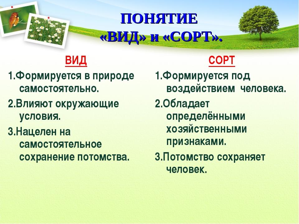 ПОНЯТИЕ «ВИД» и «СОРТ». ВИД 1.Формируется в природе самостоятельно. 2.Влияют...