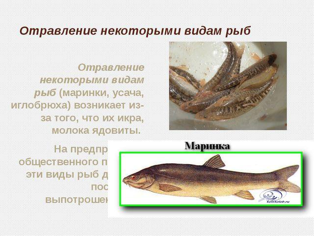 Отравление некоторыми видам рыб Отравление некоторыми видам рыб(маринки, уса...