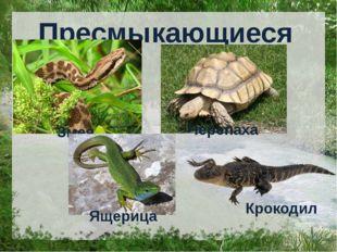 Пресмыкающиеся Змея Черепаха Ящерица Крокодил