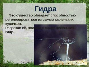 Гидра Это существо обладает способностью регенерироваться из самых маленьких