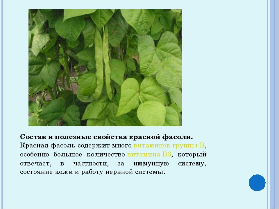 Состав и полезные свойства красной фасоли. Красная фасоль содержит многовита...