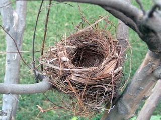 http://www.newjerseyrealestatepros.com/assets/content/images/empty%20nest.jpg