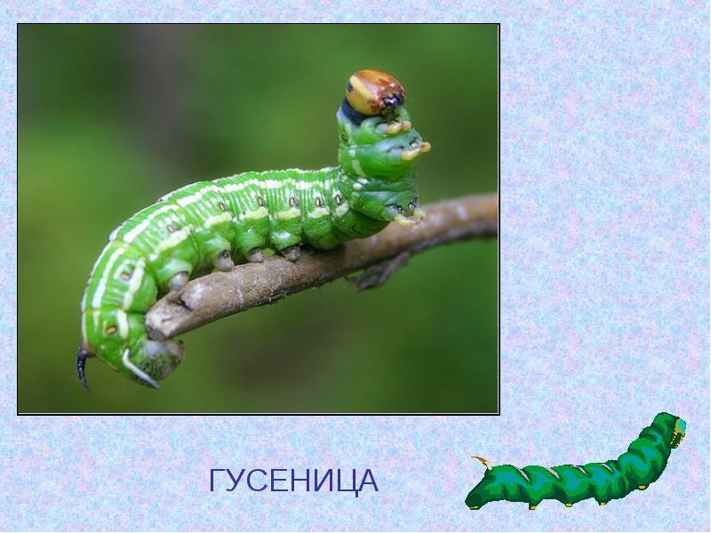 http://uch.znate.ru/tw_files2/urls_12/10/d-9491/img7.jpg