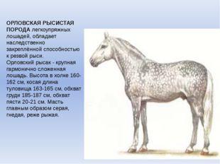 ОРЛОВСКАЯ РЫСИСТАЯ ПОРОДАлегкоупряжных лошадей, обладает наследственно закре
