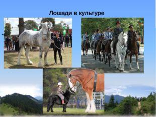 Лошади в культуре -