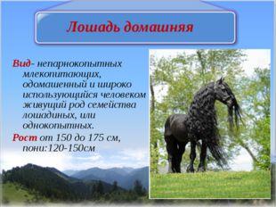 Лошадь домашняя Вид- непарнокопытных млекопитающих, одомашенный и широко испо