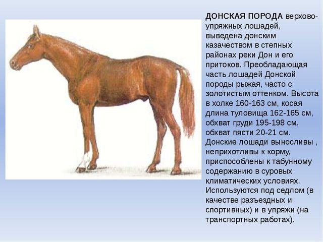 ДОНСКАЯ ПОРОДАверхово-упряжных лошадей, выведена донским казачеством в степн...