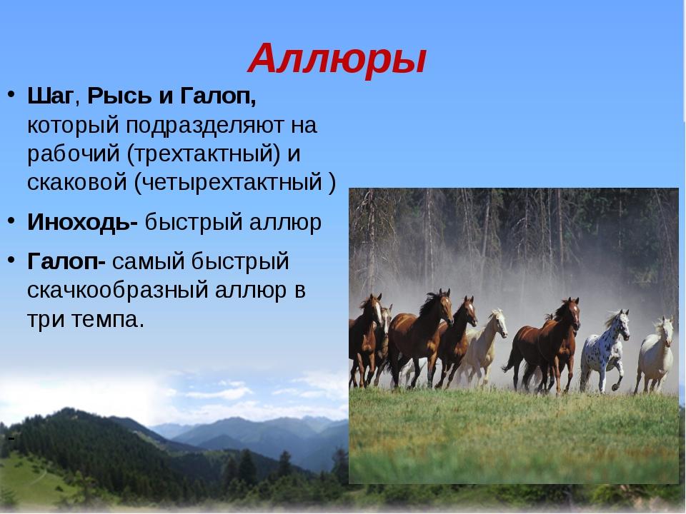 Аллюры Шаг, Рысь и Галоп, который подразделяют на рабочий (трехтактный) и ск...