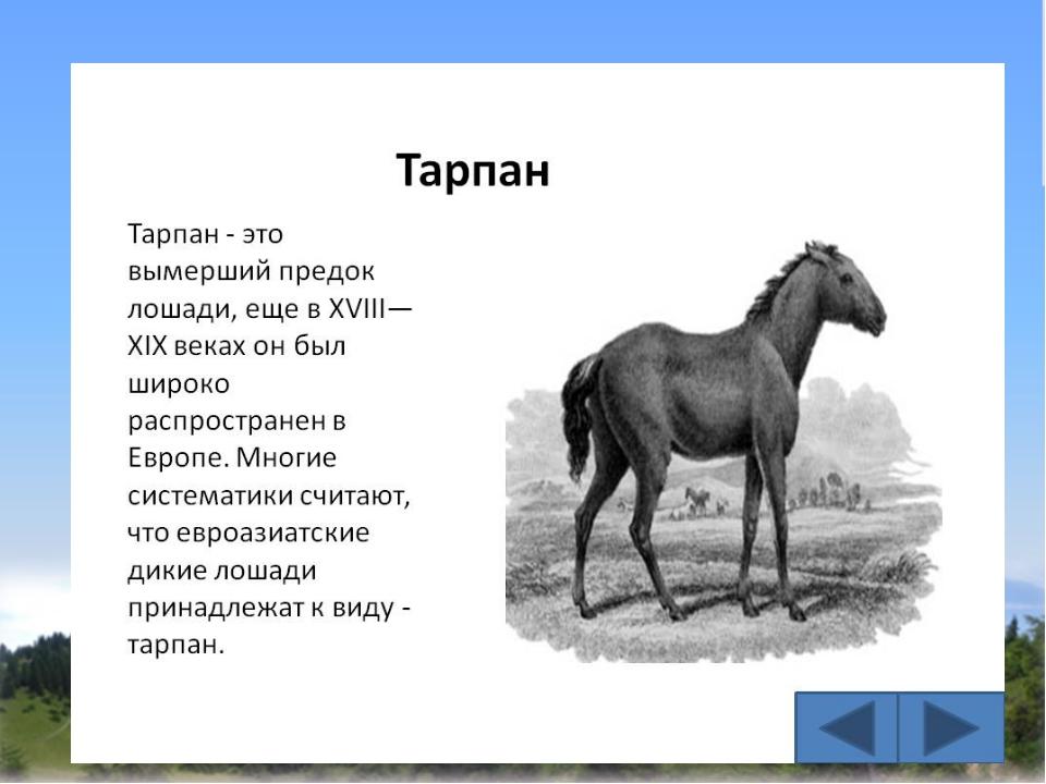 вымершая лошадь 6 букв белье для спорта