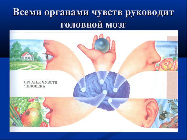 * Всеми органами чувств руководит головной мозг