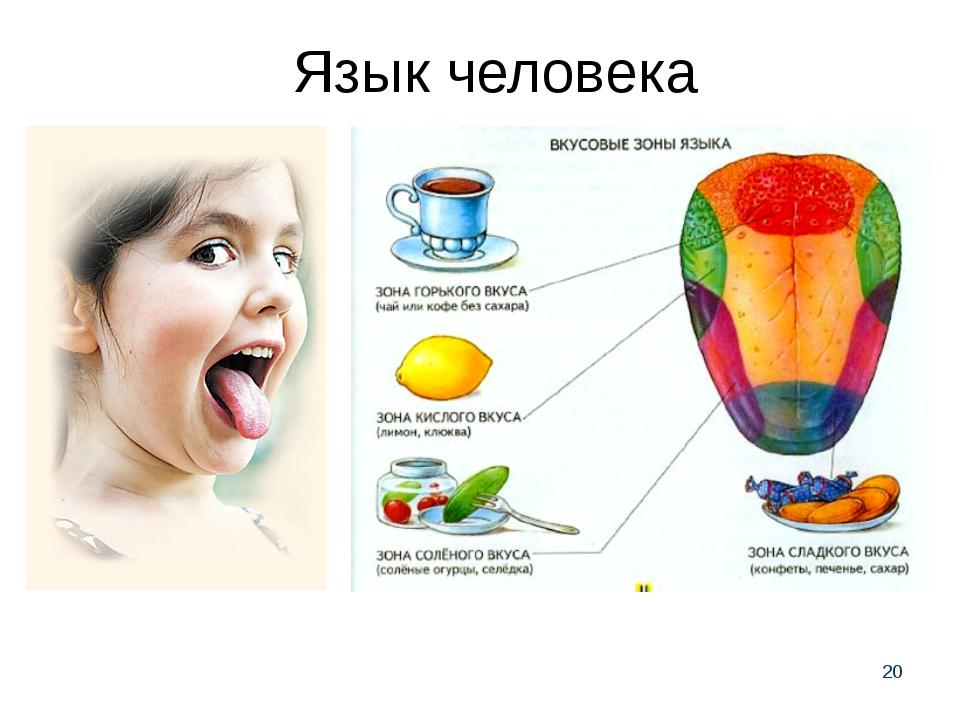 * Язык человека
