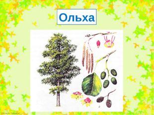 Ольха FokinaLida.75@mail.ru