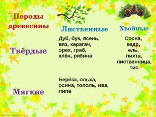 Породыдревесины Лиственные Хвойные Твёрдые Дуб,бук, ясень, вяз, карагач, оре