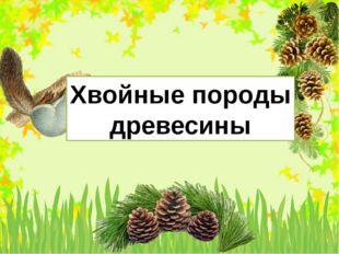 Хвойные породы древесины FokinaLida.75@mail.ru