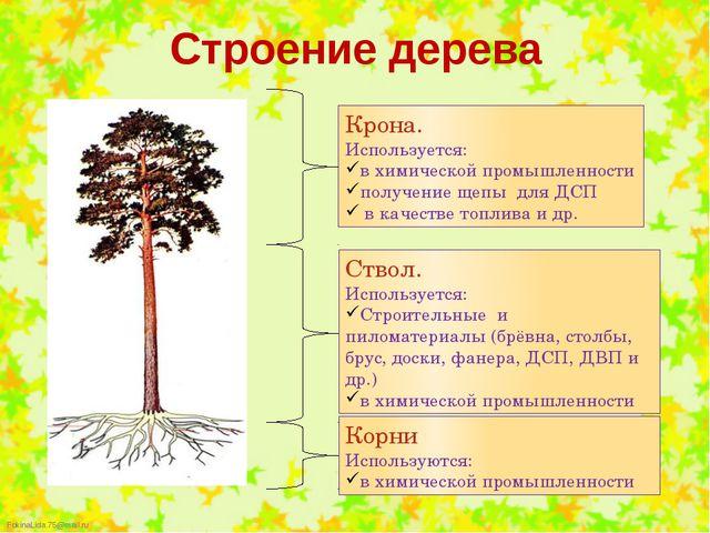 Строение дерева Крона. Используется: в химической промышленности получение ще...