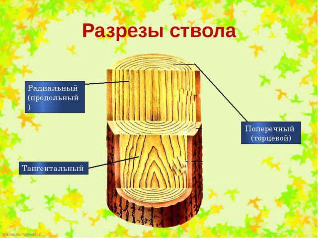 Разрезы ствола Радиальный (продольный) Тангентальный Поперечный (торцевой) Fo...