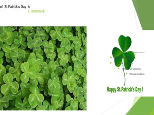 The symbol of St.Patrick's Day is a shamrock A shamrock
