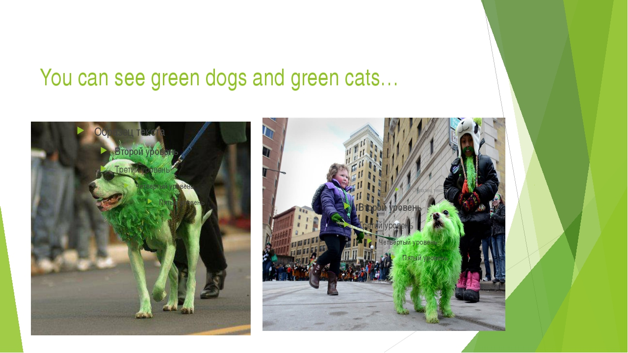 You can see green dogs and green cats…