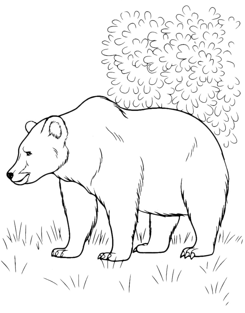 http://www.coloradisegni.it/images/disegni/animali/orso-in-natura-001.png