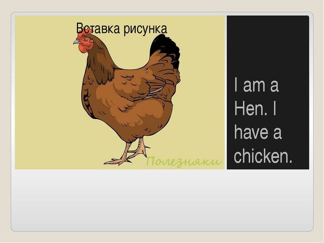 I am a Hen. I have a chicken.