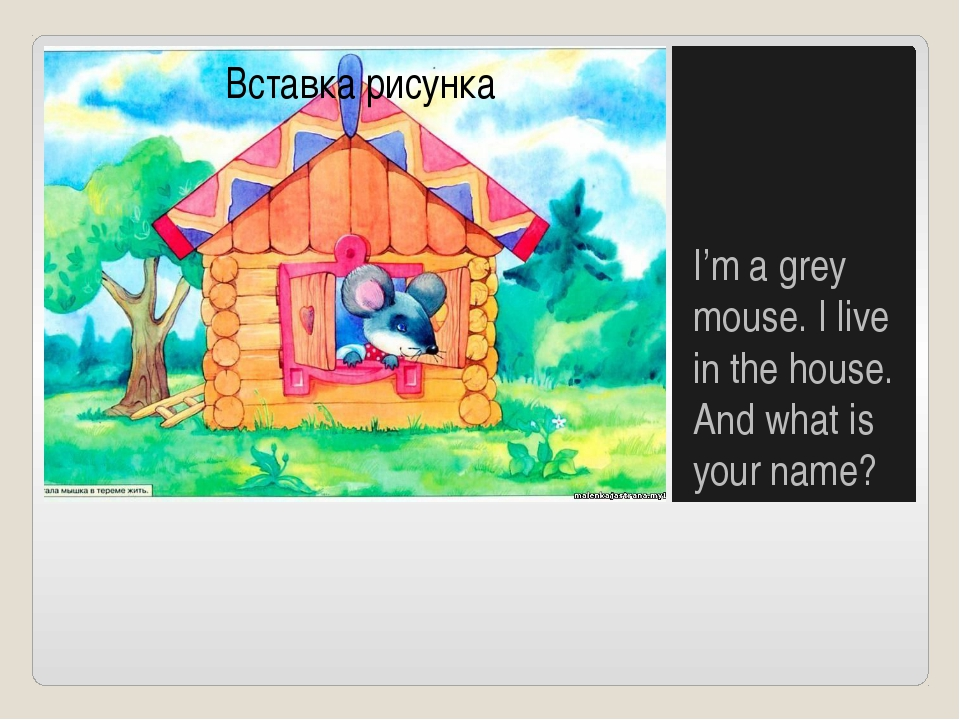 I'm a grey mouse. I live in the house. And what is your name?