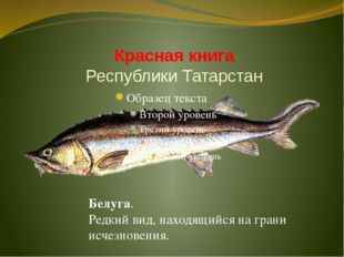 Красная книга Республики Татарстан Белуга. Редкий вид, находящийся на грани и