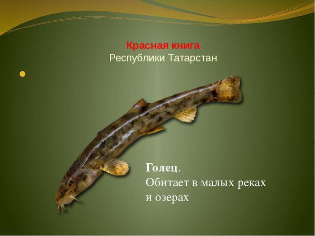 Красная книга Республики Татарстан Голец. Обитает в малых реках и озерах