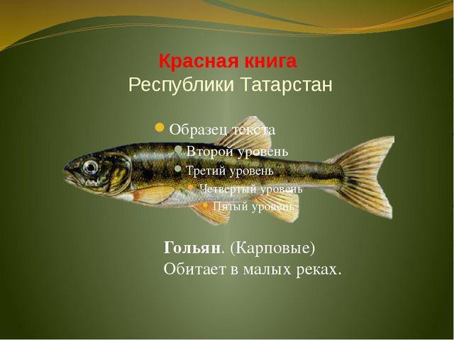 Красная книга Республики Татарстан Гольян. (Карповые) Обитает в малых реках.