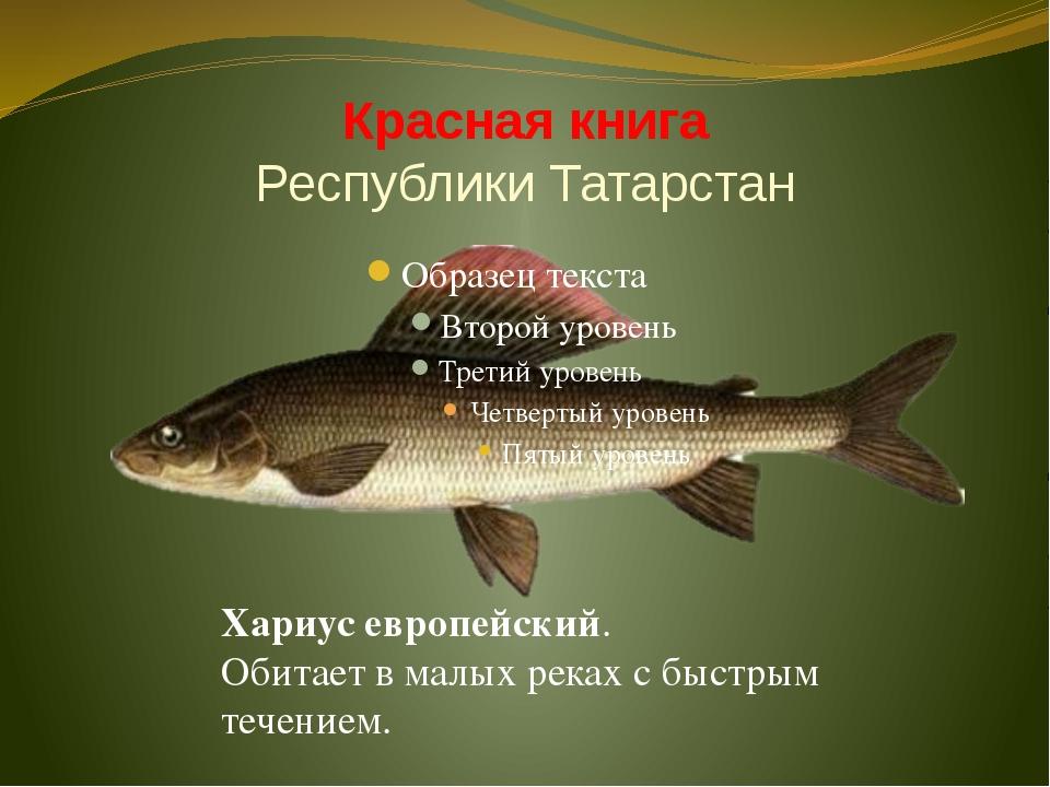 Красная книга Республики Татарстан Хариус европейский. Обитает в малых реках...
