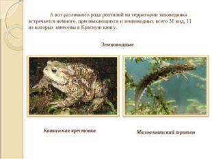 Малоазиатский тритон А вот различного рода рептилий на территории заповедник