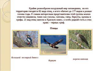 Крайне разнообразен воздушный мир заповедника, на его территории гнездятся 8
