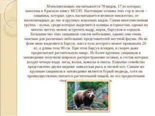 Млекопитающих насчитывается 78 видов, 17 из которых занесены в Красную книг