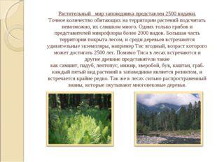 1. Водные растения - ряска малая, болотник весенний. Растительный мир запове