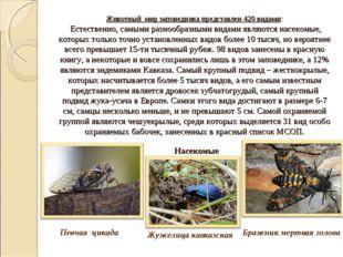 Животный мир заповедника представлен 420 видами: Естественно, самыми разнооб