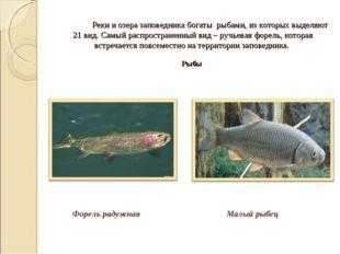 Реки и озера заповедника богаты рыбами, из которых выделяют 21 вид. Самый