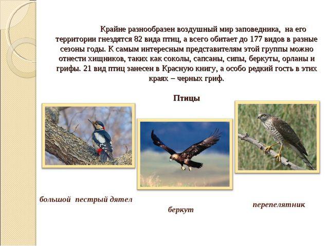 Крайне разнообразен воздушный мир заповедника, на его территории гнездятся 8...