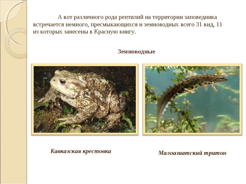 Малоазиатский тритон А вот различного рода рептилий на территории заповедник...